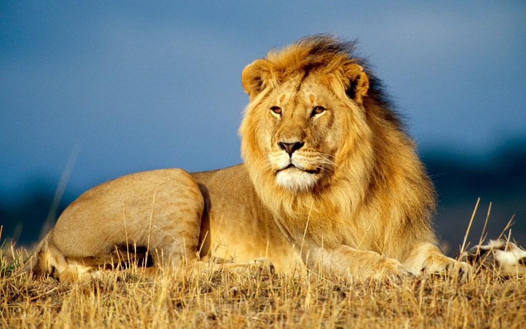 UNILAD-african_lion_king-wide_113