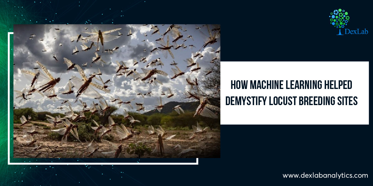 How Machine Learning Helped Demystify Locust Breeding Sites